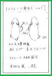 小保方実験ノート